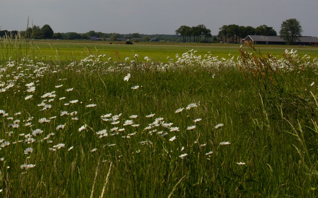 Kleurrijke bermen in Soest
